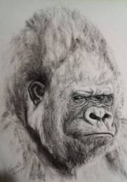Retrato de gorila plateado